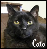Cato the Bear