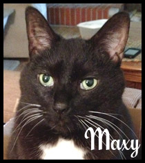 Maxy Cat